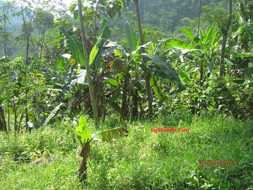 jual tanah kebun di jawa