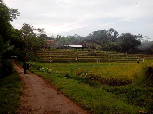 Jual Sawah di Subah Batang (200 M dari Pantura)