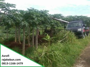 Tanah Sawah Dijual di Magelang
