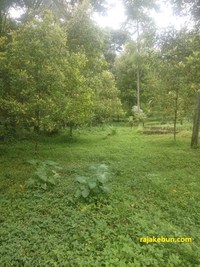 tanah-kebun-dijual-di-cilimus-kuningan-jawa-barat
