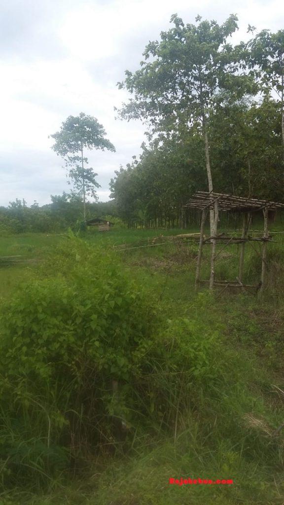 jual-tanah-cocok-untuk-kandang-sapi