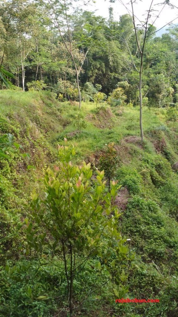 tanah dijual di sindangjawa