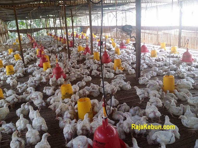 jual kandang ayam di sukorejo